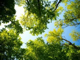 Reforestation Or Carbon Capture - Which Way Is More Efficient In Getting Rid Of CO2? - Carbon Herald