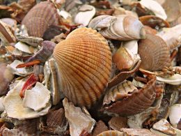 A New Carbon Removal Technology Turns CO2 Into Seashells - Carbon Herald